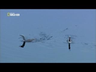 [Nat Geo Wild] ����� �������� ������ - ��� ������� (2 �����)